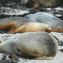 <b>S.O.S Seals On Siesta</b> | Kamera: NIKON D70s | Brennweite: 155mm | Blende: ƒ/16 | Verschlusszeit: 1/200s |