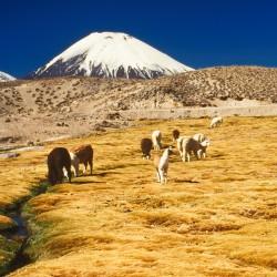 <b>Volcanas Pomerape and Parinacota</b> | Kamera: NIKON D700 |  |  | Verschlusszeit: 1/80s | ISO: 200