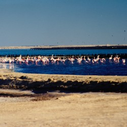 <b>Flamingos @ Swakopmund salt works</b> | Kamera: NIKON D700 |  |  | Verschlusszeit: 1/100s | ISO: 200
