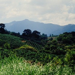 <b>Coffee plantation in the highland</b> | Kamera: NIKON D700 |  |  | Verschlusszeit: 1/60s | ISO: 200