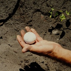 <b>Park ranger shows turtle egg</b> | Kamera: NIKON D700 |  |  | Verschlusszeit: 1/160s | ISO: 200