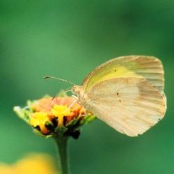 <b>Butterfly</b> | Kamera: NIKON D700 |  |  | Verschlusszeit: 1/40s | ISO: 200