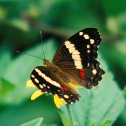 <b>Butterfly</b> | Kamera: NIKON D700 |  |  | Verschlusszeit: 1/30s | ISO: 200