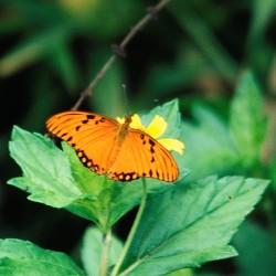 <b>Butterfly</b> | Kamera: NIKON D700 |  |  | Verschlusszeit: 1/50s | ISO: 200