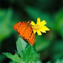 <b>Butterfly</b> | Kamera: NIKON D700 |  |  | Verschlusszeit: 1/80s | ISO: 200