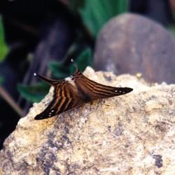 <b>Butterfly</b> | Kamera: NIKON D700 |  |  | Verschlusszeit: 1/25s | ISO: 200