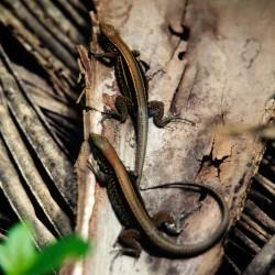 <b>Lizards</b> | Kamera: NIKON D700 |  |  | Verschlusszeit: 1/60s | ISO: 200