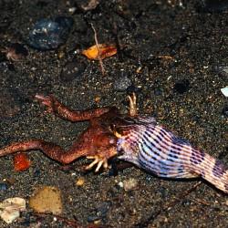 <b>Snake and toad, Uvita</b> | Kamera: NIKON D700 |  |  | Verschlusszeit: 1/25s | ISO: 200