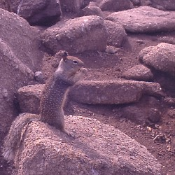 <b>Squirrel Camouflage, Monterey</b> |  |  |  |  |