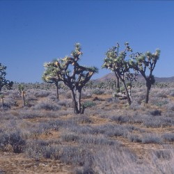 <b>Yoshua Tree National Park</b> |  |  |  |  |