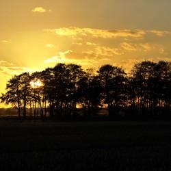 <b>Herbst in der Wümmeniederung</b> | Kamera: NIKON D700 | Brennweite: 150mm | Blende: ƒ/8 | Verschlusszeit: 1/1000s | ISO: 200