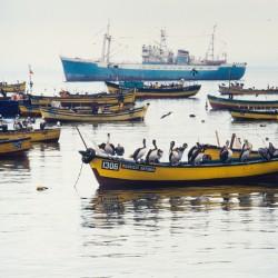 <b>Pelicans, Coquimbo</b> | Kamera: NIKON D700 |  |  | Verschlusszeit: 1/80s | ISO: 200