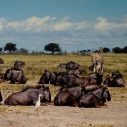 <b>Wildebeests, Etosha National Park</b> | Kamera: NIKON D700 |  |  | Verschlusszeit: 1/160s | ISO: 200