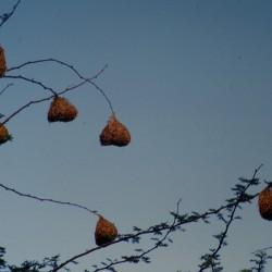 <b>Etosha National Park</b> | Kamera: NIKON D700 |  |  | Verschlusszeit: 1/320s | ISO: 200