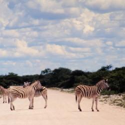 <b>Plains zebras, Etosha National Park</b> | Kamera: NIKON D700 |  |  | Verschlusszeit: 1/125s | ISO: 200