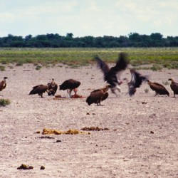 <b>Etosha National Park</b> | Kamera: NIKON D700 |  |  | Verschlusszeit: 1/50s | ISO: 200