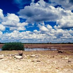 <b>Etosha National Park</b> | Kamera: NIKON D700 |  |  | Verschlusszeit: 1/80s | ISO: 200