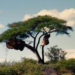 <b>Etosha National Park</b> | Kamera: NIKON D700 |  |  | Verschlusszeit: 1/100s | ISO: 200