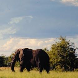 <b>Elephant, Etosha National Park</b> | Kamera: NIKON D700 |  |  | Verschlusszeit: 1/200s | ISO: 200