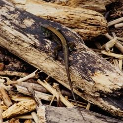 <b>Lizard</b> | Kamera: NIKON D700 |  |  | Verschlusszeit: 1/125s | ISO: 200