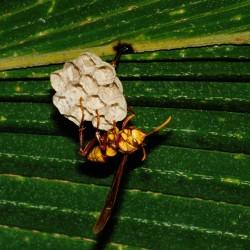 <b>Solitary wasp</b> | Kamera: NIKON D700 |  |  | Verschlusszeit: 1/50s | ISO: 200
