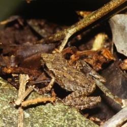 <b>Camouflaged frog</b> | Kamera: NIKON D700 |  |  | Verschlusszeit: 1/20s | ISO: 200