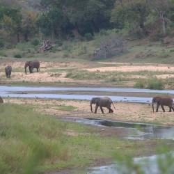 <b>African elephants (Loxodonta africana)</b> | Kamera: NIKON D610 | Brennweite: 300mm | Blende: ƒ/7.1 | Verschlusszeit: 1/125s | ISO: 200