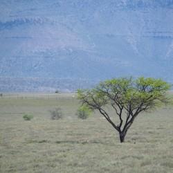 <b>Camdeboo National Park</b> | Kamera: NIKON D610 | Brennweite: 300mm | Blende: ƒ/6.3 | Verschlusszeit: 1/1000s | ISO: 400